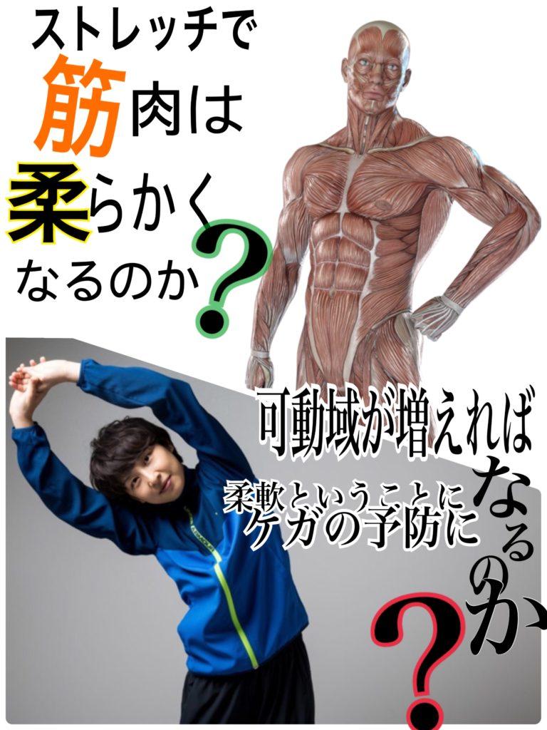 ストレッチは筋肉を柔らかくするのか?