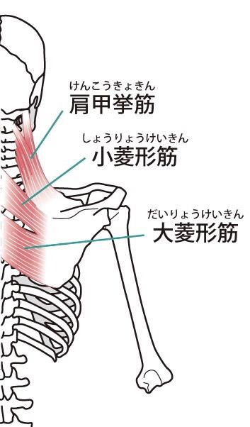肩甲骨はがしの効果