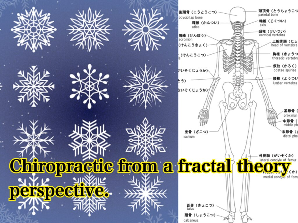 fractal biology and chiropractic