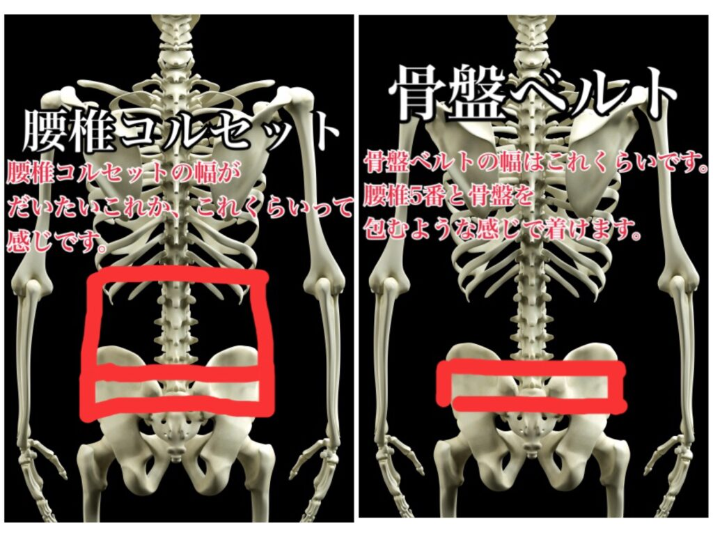 腰椎ベルトと骨盤ベルトの違い